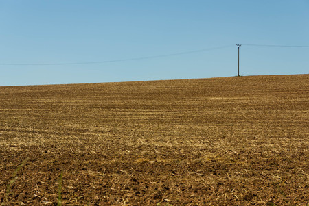 powerlines: Powerlines on a harvested field