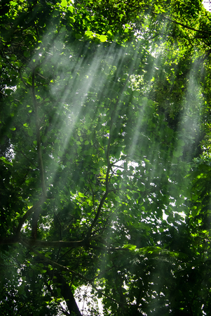 sulight: Rays of light coming through leaves in a tropical jingle