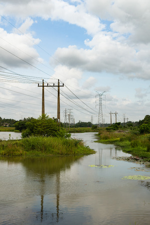 powerlines: Powerlines leading through a tropical swamp in a rural landscape