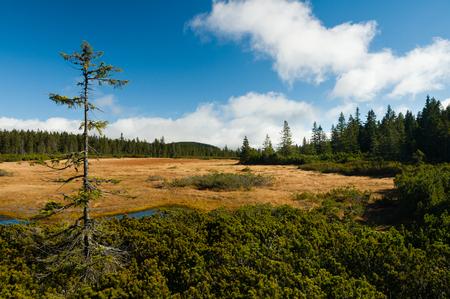 Černohorské rašeliniště peat national park in the Krkonoše mountain range, Czech Republic Reklamní fotografie