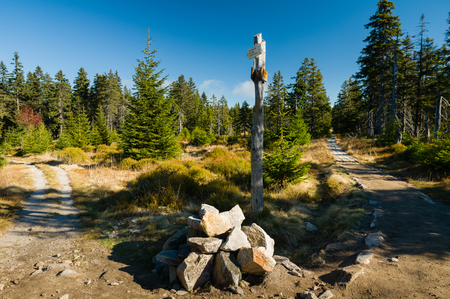 Signpost at intersection of two hiking trails in an untouched wild forrest