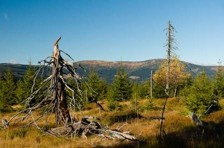 Dry dead trees in a forrest clearing with mountains in the background Reklamní fotografie