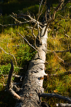 Fallen dry dead tree trunk in autumn colour grass Reklamní fotografie