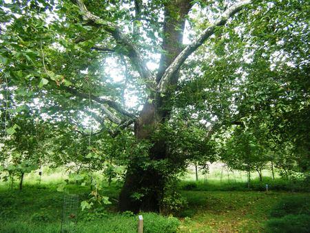 Lone Tree Banco de Imagens - 51271146
