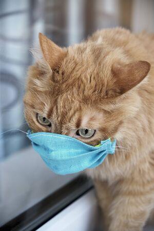 Red cat in a protective mask. Protective antiviral mask on the cats face, Protective face mask for animals. COVID-19, Coronovirus, hantavirus concept. Medical mask from coronavirus, hantavirus. Archivio Fotografico