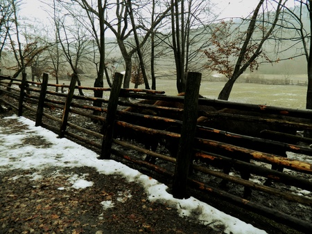 fence: Bulls fenced wooden fence woods Stock Photo