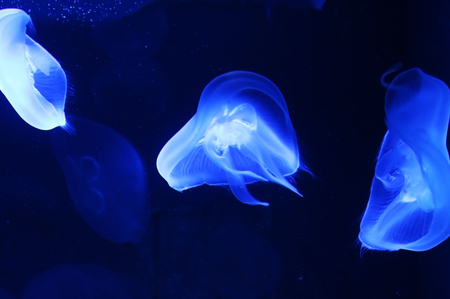 animal blue jellyfish 免版税图像