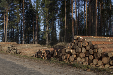 Piles of pulpwood and sawlogs at the road