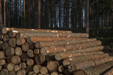 Pile of pine logs Stock Photo