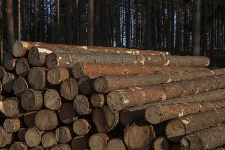 Pile of pine timber