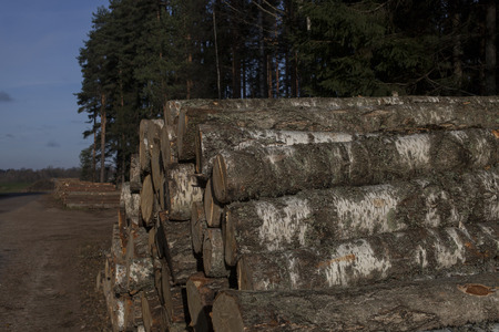Pile of birch timber at the road Stock Photo