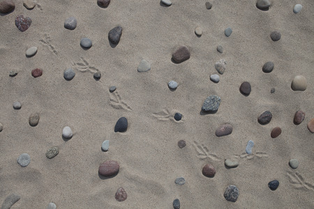 Pebbles, sand and bird footprints on the beach, for background