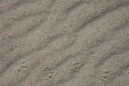 Wavy sand with bird footprints, for background Stock Photo