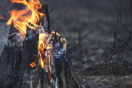 Closeup of flaming stump just after a forest fire. Archivio Fotografico
