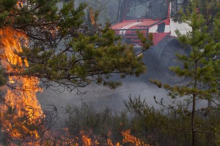 FIRE ENGINE: Fire engine derrière forestiers flammes de feu et de fumée.