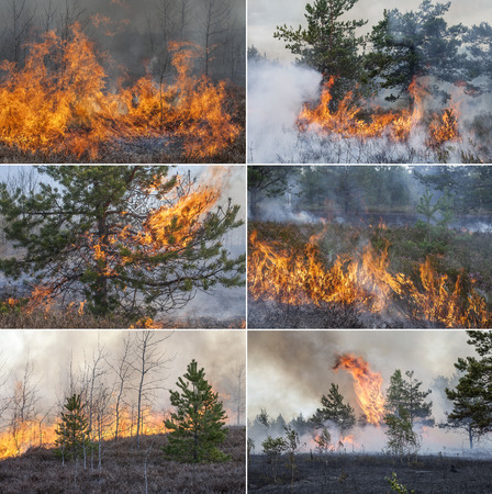 Collection with six forest fire images to visualize wildfires and prescribed burning of forest in Europe and Asia:UK, Scandinavia, Russia, Germany, mountain forests, woods of conifers in any country.