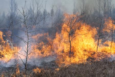 buisson: Feu de bois. flammes hautes et de la fumée. Feu de brousse.