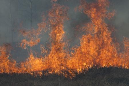 slash: High flames on dark background. Wood fire. Bush fire. Stock Photo