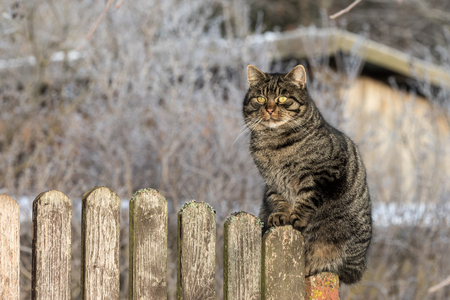 Cat on wooden fence