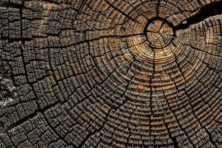 Tree rings and cracks in old brown to gray pine tree end. Stock Photo