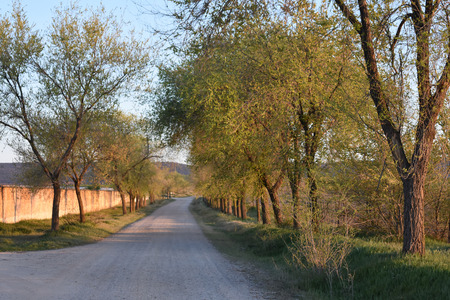 castilla: Road to the village with trees