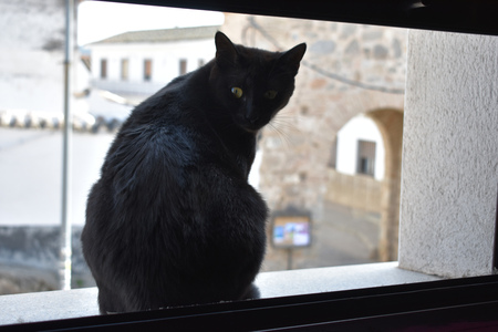 A black cat in the window looks curiously at the neighbors