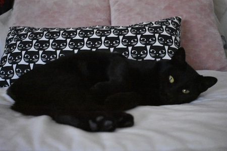 A black cat waiting lying down to be caressed 版權商用圖片