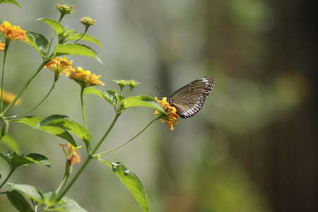 the author took a set of photos of butterflies in the botanical garden Very beautiful, colorful butterflies make a very beautiful picture.