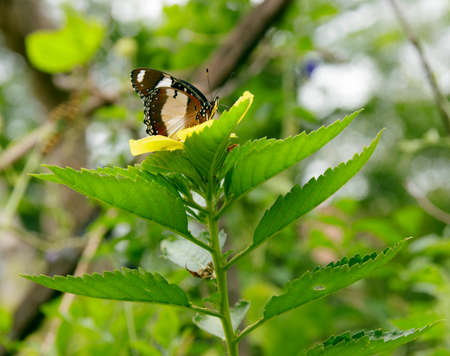 Natural photo: butterfly at the Botanic Garden (Vietnam). The author took a set of photos of butterflies in the botanical garden Very beautiful, colorful butterflies make a very beautiful picture.