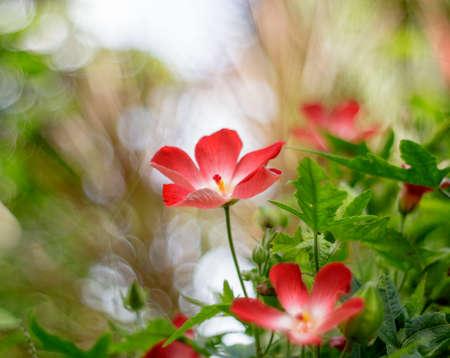Natural photo: Sam Bo Chinh flowers at the Botanic Garden (Vietnam)
