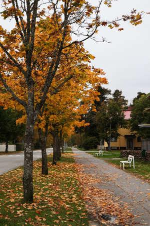 Tree-lined sidewalk in fall season