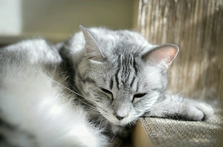 isolated: grey cat isolated on a white. Stock Photo