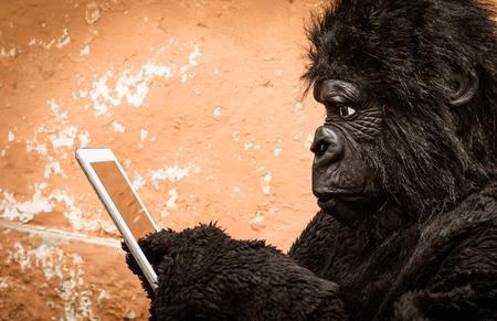 gorila: Gorila con Tablet - Concepto de mono animal de adaptaci�n a las nuevas tecnolog�as de la vida moderna