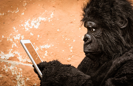adaptation: Gorilla with Tablet - Concept of animal monkey adaptation to new modern life technologies Stock Photo