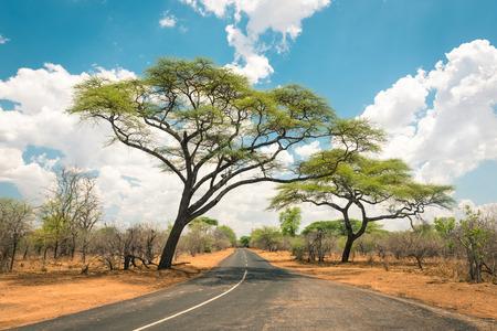 zimbabwe: Paisaje africano con la carretera vacía y árboles en Zimbabwe - En el camino a Kazungula y la frontera con Botswana a lo largo del Zambeze Drive - Concepto de aventura en la naturaleza en el territorio de África Foto de archivo