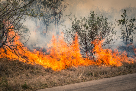 scenario: Bushfire burning at Kruger Park in South Africa - Disaster in bush forest with fire spreading in dry woods Stock Photo