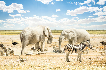 chobe national park: Group of wild mixed animals relaxing on a water pool spot at Etosha Park - World famous natural wonder in the north territory of Namibia - African safari game drives and free wildlife outdoors Stock Photo