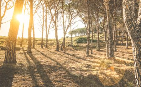 """Bomen en schaduwen in bossen bij zonsondergang door """"Scopeto"""" heuvel in Giglio Island Toscane - Natuurverkenning concept op inspirerende bosrijke omgeving met zonneschijn halo en sunflare - Warm vintage filter Stockfoto"""