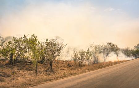 南アフリカの自然公園で燃えるブッシュファイア - 乾燥した森に火が広がるブッシュの森の災害