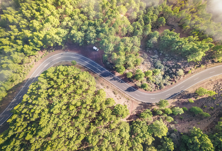 Aerial view of road inside forest with trees on Teide natural park in Tenerife - Wander travel and new trends photography concept with birdseye image of woods nature landscape - Sunny day filter