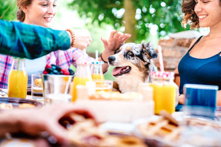 Young women on healthy pic nic breakfast with cute puppy at countryside farm house - Genuine life style concept with millennial friends having fun together outside at garden party
