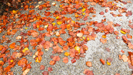 Fall leaves on ground Archivio Fotografico