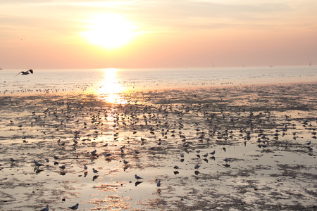 migrated seagulls stand and flying on the beach during sunset photo