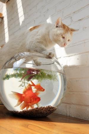 goldfish Stock Photo - 15446189
