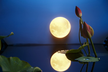 Mid Autumn Moon Stock Photo