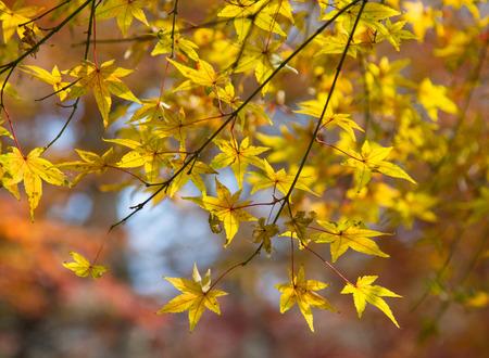 Red leaves of Qixia mountain, Nanjing, Jiangsu Stock Photo