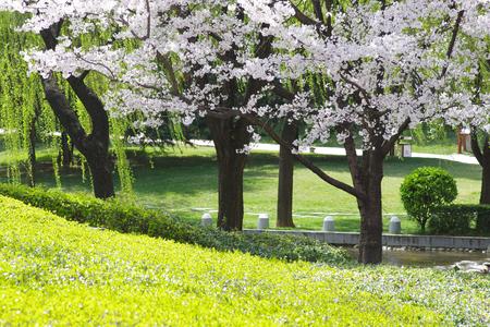 흰 꽃밭 스톡 콘텐츠