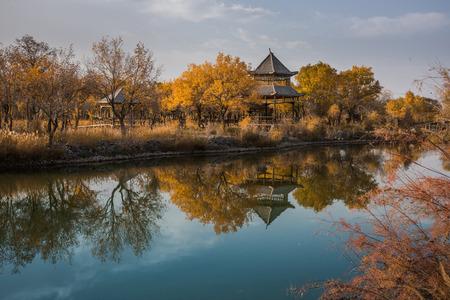 南新疆ユーフラテス ポプラ森林公園