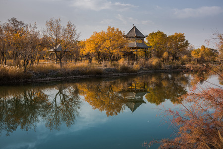Southern Xinjiang euphrates poplar Forest Park