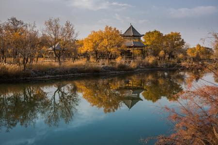 Southern Xinjiang euphrates poplar forest Park Stock Photo